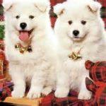 cute dogs shopping